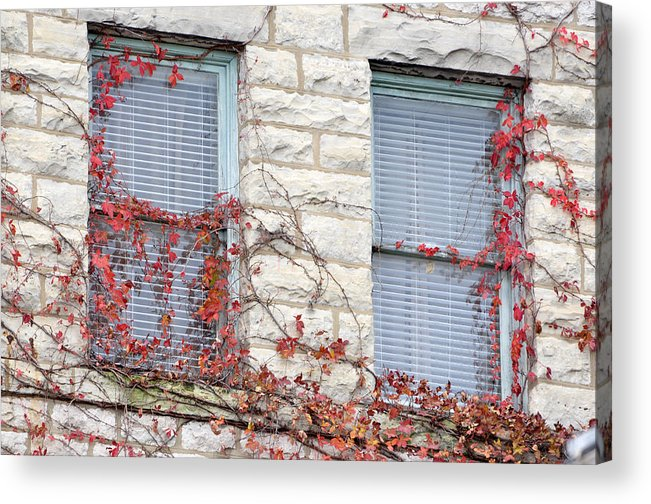 Architectural Acrylic Print featuring the photograph Vines In Fall by Jan Amiss Photography