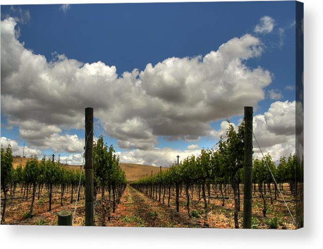 Livermore Valley Winery Acrylic Print featuring the photograph Vineyard by Douglas Shier