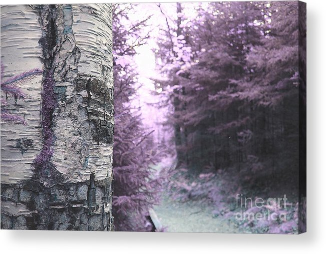 Forest Acrylic Print featuring the photograph Violet Forest by Samiksa Art