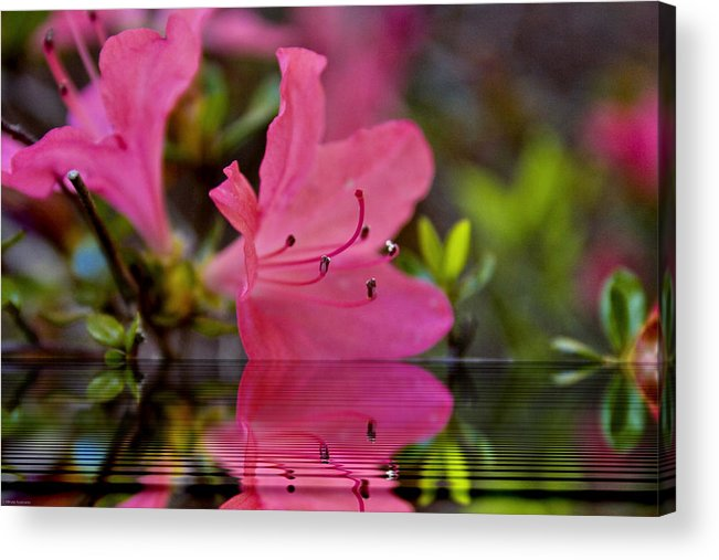 Water Acrylic Print featuring the digital art Water Azalea by Ches Black