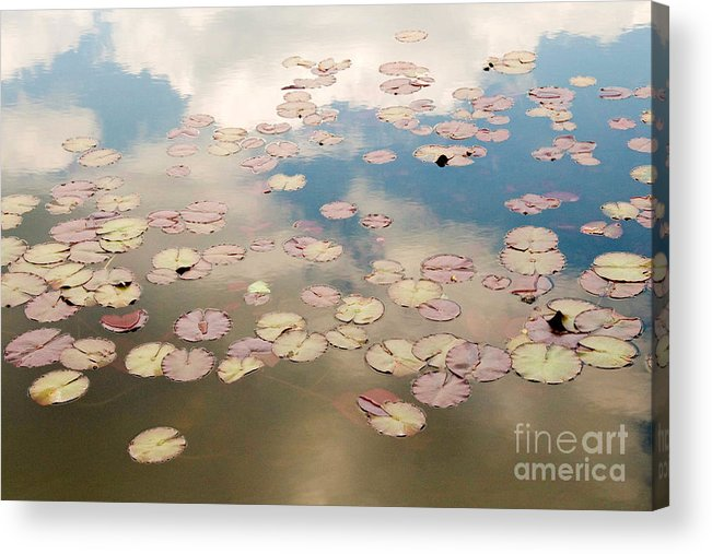 Nature Acrylic Print featuring the photograph Water Lilies In Schoenbrunn Vienna Austria by Julia Hiebaum