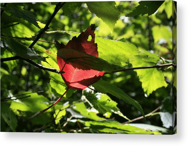 Foliage Acrylic Print featuring the photograph Wealth by Alan Rutherford