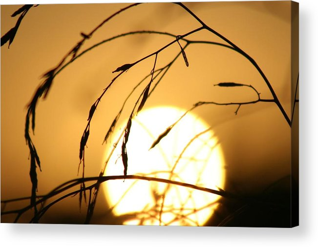 Sun Acrylic Print featuring the photograph Weeds In The Sun by Kerry Reed