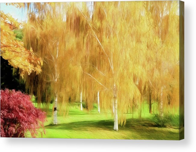 White Birch Acrylic Print featuring the photograph Weeping White Birch by Donna Kennedy