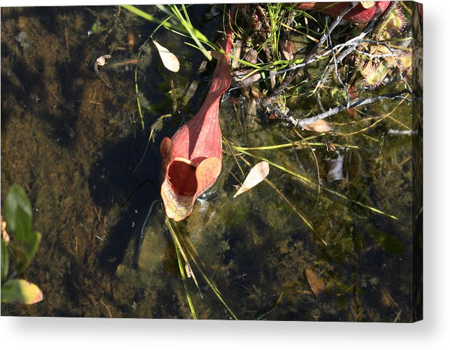 Wildflower Acrylic Print featuring the photograph Well by Alan Rutherford
