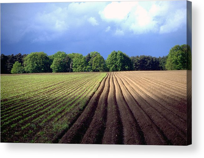 Wendland Acrylic Print featuring the photograph Wendland by Flavia Westerwelle