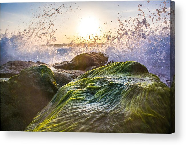 Ocean Acrylic Print featuring the photograph Wet Moss by JJ Tondo