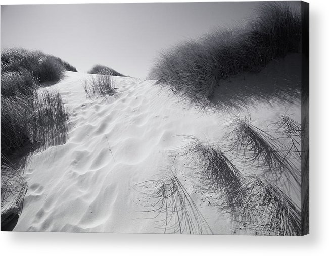 Dune Grass Acrylic Print featuring the photograph Where The Wild Grass Blows by Bonnie Bruno
