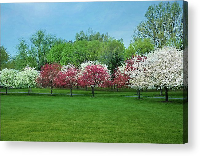 Isabela Cocoli Acrylic Print featuring the photograph White And Pink Cherry Blossoms by Isabela and Skender Cocoli