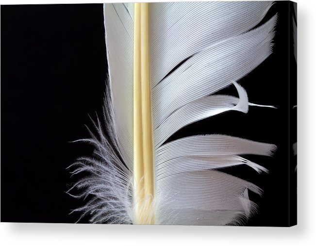 Feather Acrylic Print featuring the photograph White Feather by Bob Orsillo