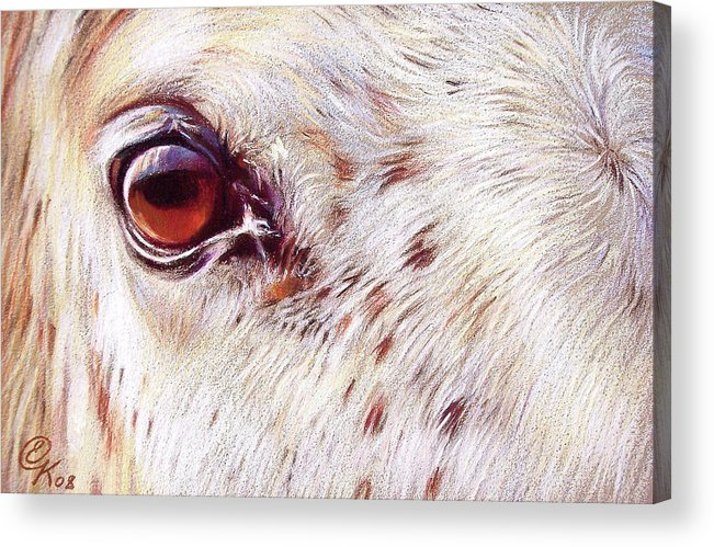 Horse Animal Equine Portrait Drawing Acrylic Print featuring the drawing White Horse Close-up by Elena Kolotusha