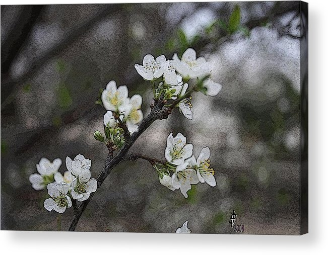 Flowers Acrylic Print featuring the photograph White Simplicity by Janey Loree