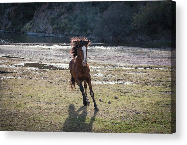 Wild Horse Acrylic Print featuring the photograph Wild And Free by Jacqueline Cavanagh