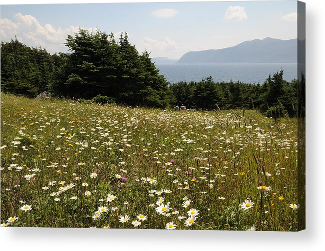 Wildflowers Acrylic Print featuring the photograph Wildflowers At Lobster Cove by Terese Loeb Kreuzer