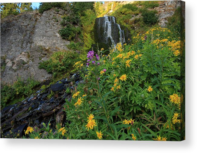 Wildflowers Acrylic Print featuring the photograph Wildflowers At Vidae Falls by Hollie Adams