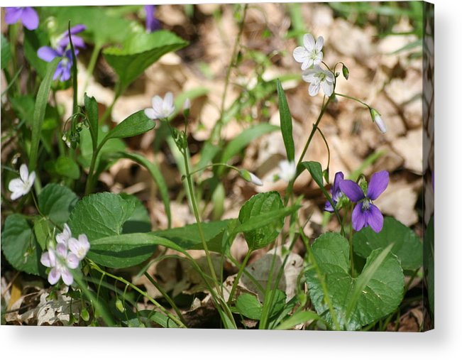 Landscape Acrylic Print featuring the photograph Wildflowers II by Eric Irion