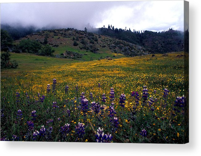 Landscapes Acrylic Print featuring the photograph Wildflowers In Fog 2 by Kathy Yates