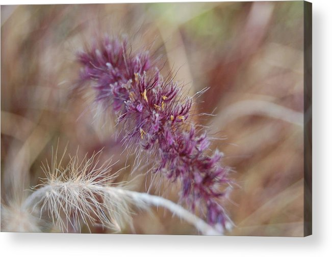 Wild Acrylic Print featuring the photograph Wildgrass Collage by Jean Booth