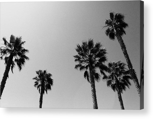 Palm Trees Acrylic Print featuring the photograph Wind In The Palms- By Linda Woods by Linda Woods