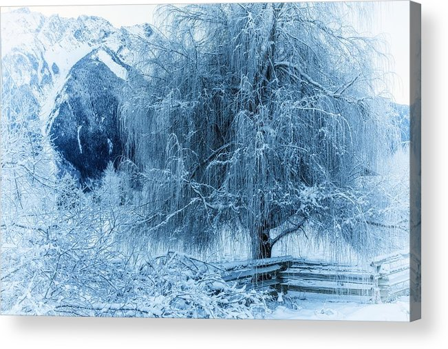 Frosty Acrylic Print featuring the photograph Winter Blues by Dave Steers