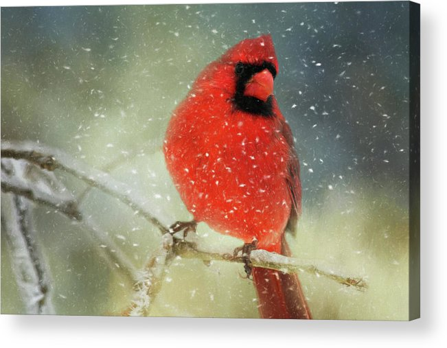 Animal Acrylic Print featuring the photograph Winter Card by Lana Trussell