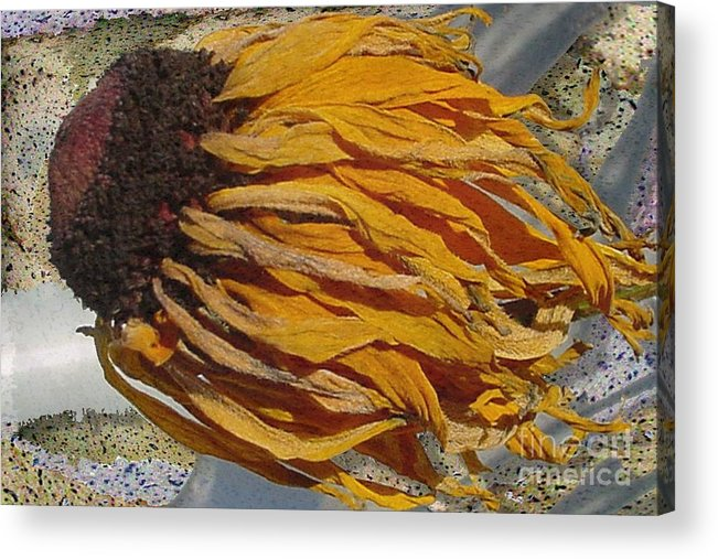Digital Art Acrylic Print featuring the digital art Winter Flower by Ron Bissett