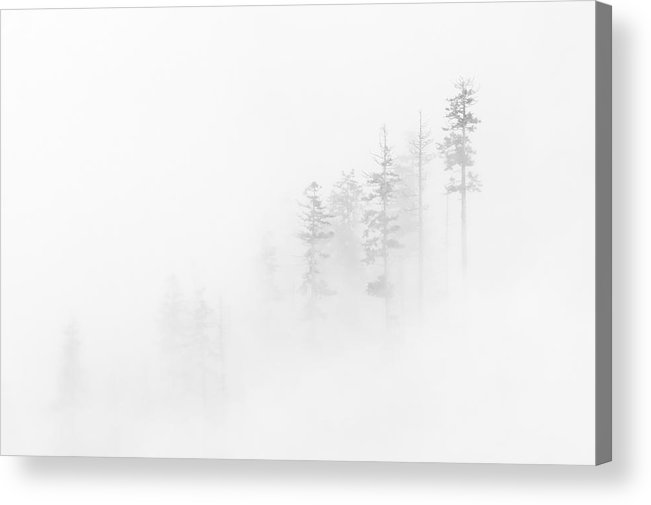 Winter Acrylic Print featuring the photograph Winter Veil by Mike Dawson