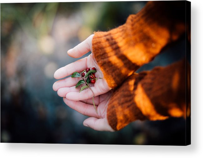 Woman Acrylic Print featuring the photograph Woman Hands Holding Cranberries by Aldona Pivoriene