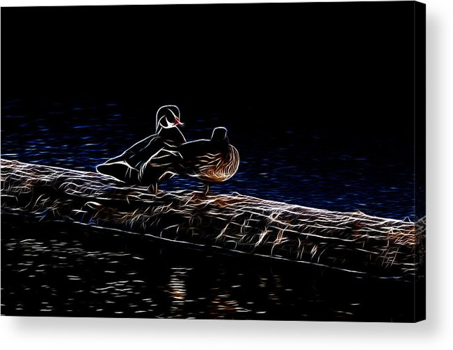 Wood Duck Acrylic Print featuring the photograph Wood Duck Pair - Fractal by Lawrence Christopher
