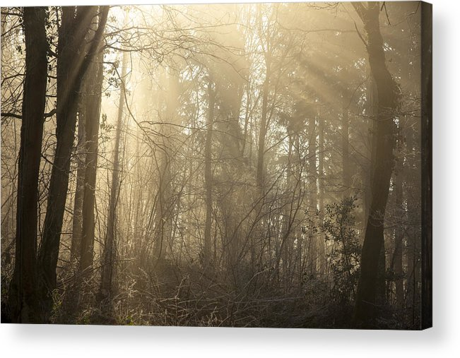 Clare Bambers Acrylic Print featuring the photograph Woodland Glade 2 by Clare Bambers