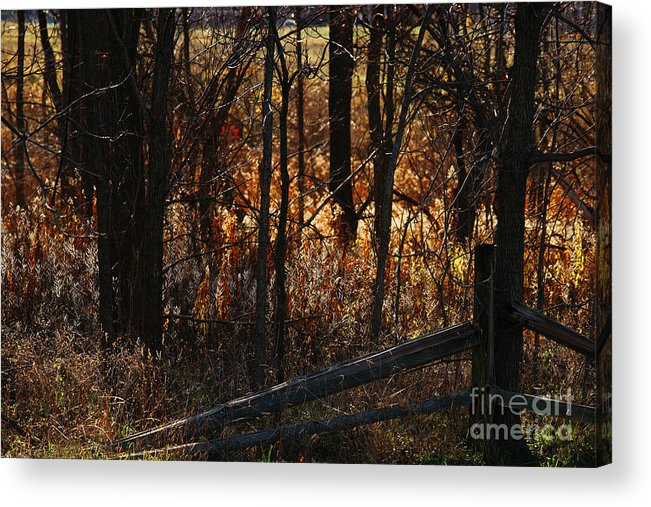 Michigan Acrylic Print featuring the photograph Woods - 1 by Linda Shafer