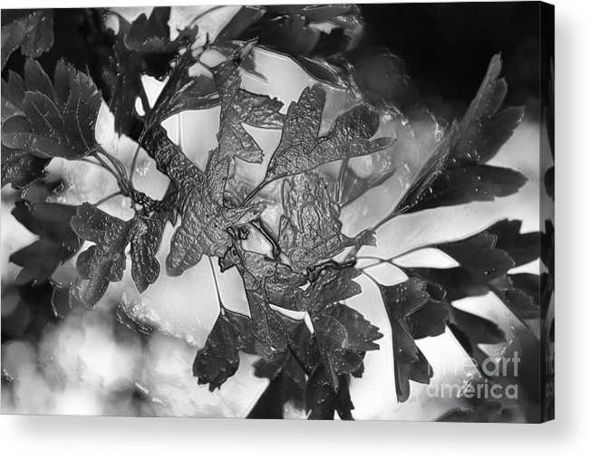Art Acrylic Print featuring the photograph Wrapped Leaves by Tabitha Fox