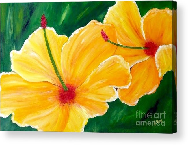 Yellow Flowers Acrylic Print featuring the painting Yellow Hibiscus by Laura R OKelly