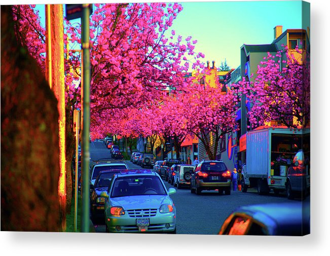 Yew Acrylic Print featuring the photograph Yew Street Spring by Paul Kloschinsky
