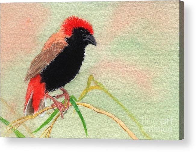 Bird Acrylic Print featuring the painting Zanzibar Red Bishop by Lynn Quinn