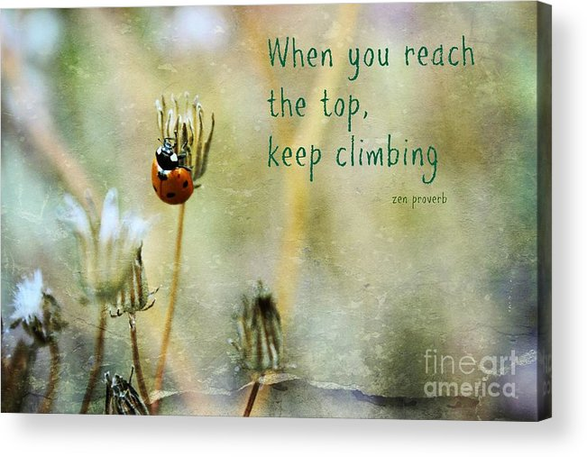 Lady Bug Acrylic Print featuring the photograph Zen Proverb by Clare Bevan