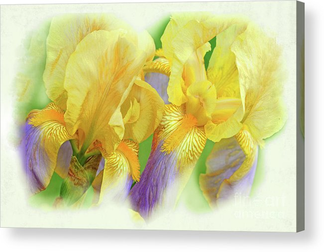 Iris Flowers Acrylic Print featuring the photograph Amenti Yellow Iris Flowers by Regina Geoghan