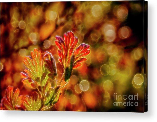 Abstract Acrylic Print featuring the digital art Autumn's Glow 2 by Veikko Suikkanen