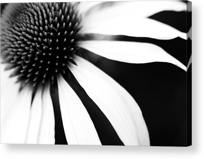 Sweden Acrylic Print featuring the photograph Black And White Flower Maco by Johan Klovsjö