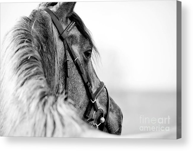 Equitation Acrylic Print featuring the photograph Black-and-white Portrait Of A Sports by Elya Vatel