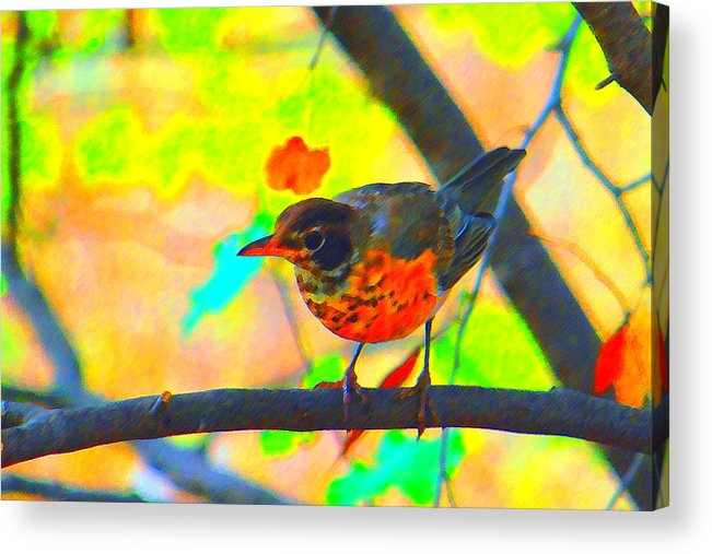 Brushed Robin Acrylic Print featuring the photograph Brushed Robin by Edward Swearingen
