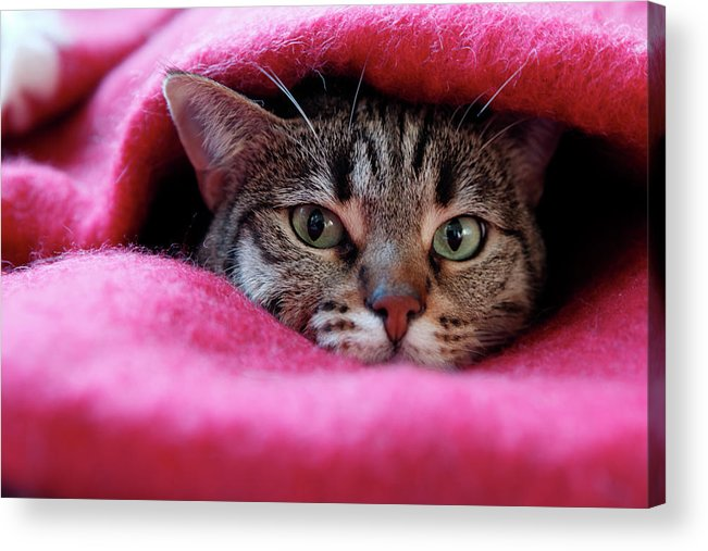 Pets Acrylic Print featuring the photograph Cats Den by Christian Jacquet