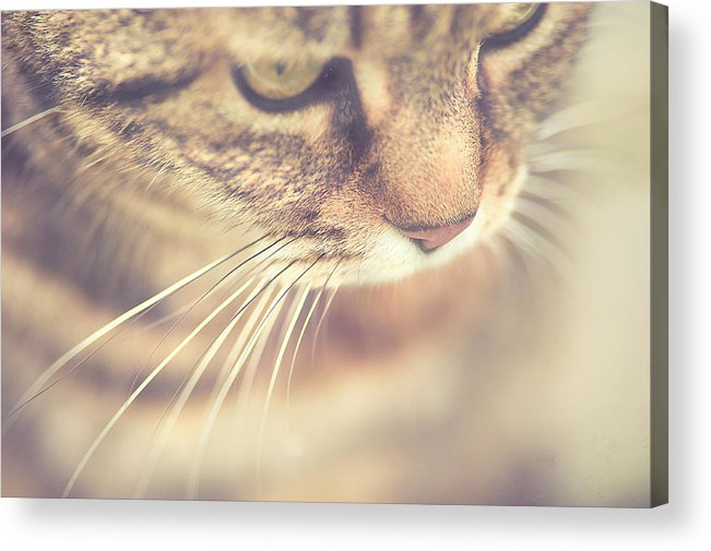 Pets Acrylic Print featuring the photograph Cats Whiskers by Ly Wylde Photography