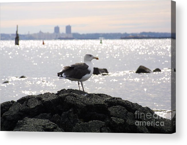 Lone Gull Stands On Rock Acrylic Print featuring the photograph Gull Isle II by Darren Dwayne Frazier