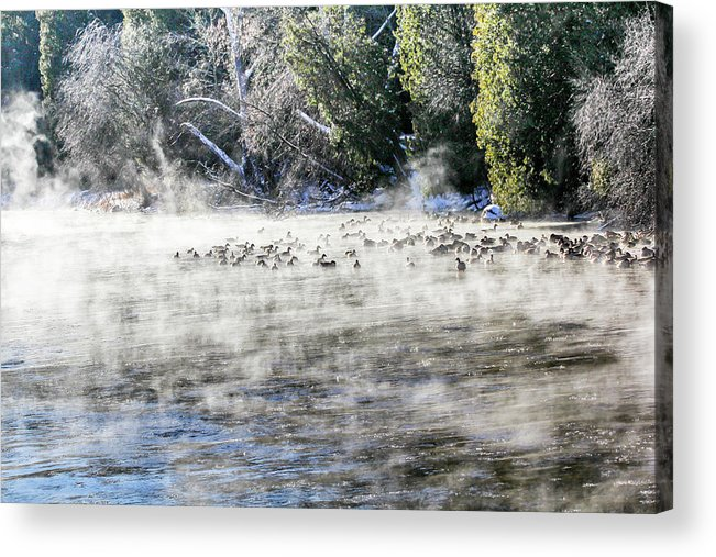 Speed River Acrylic Print featuring the photograph Misty River by Nick Mares