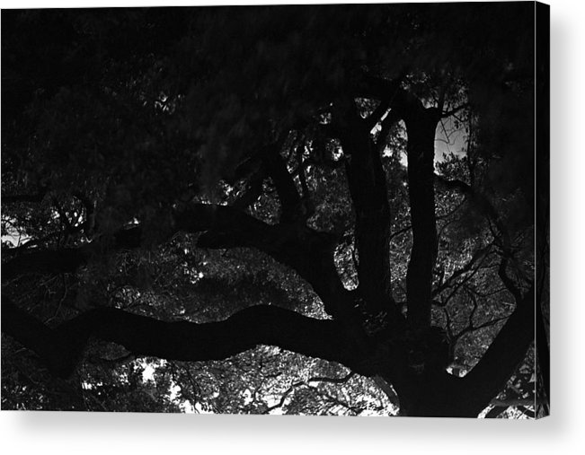 Oak Tree At Night Acrylic Print featuring the photograph Oak Tree At Night by Edward Swearingen