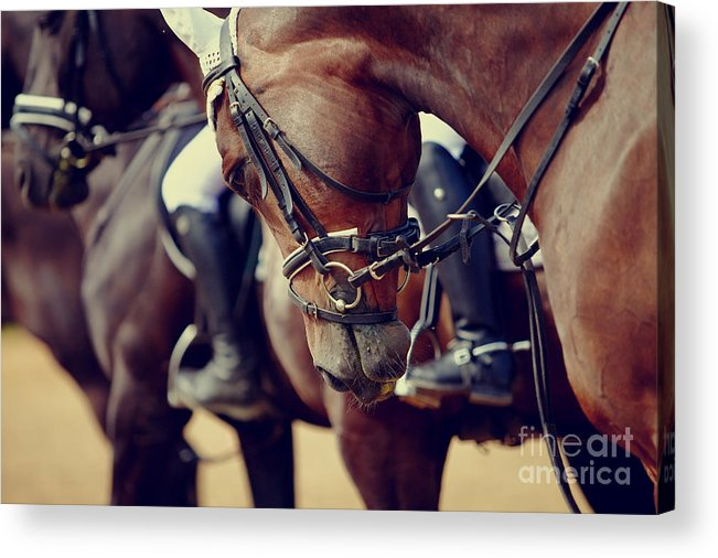 Pets Acrylic Print featuring the photograph Portrait Of A Sports Stallion. Riding by Elya Vatel