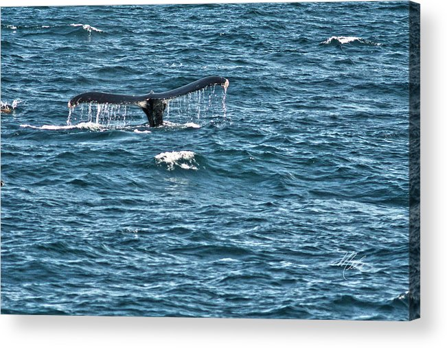 Humpback Whale Tail Acrylic Print featuring the photograph Whale Of A Tail by Meta Gatschenberger