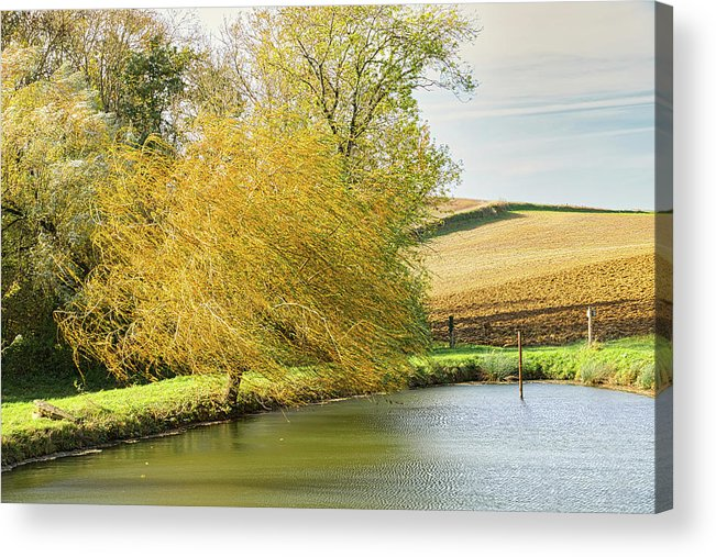 Wind Acrylic Print featuring the photograph Wind In The Willow by Michael Briley