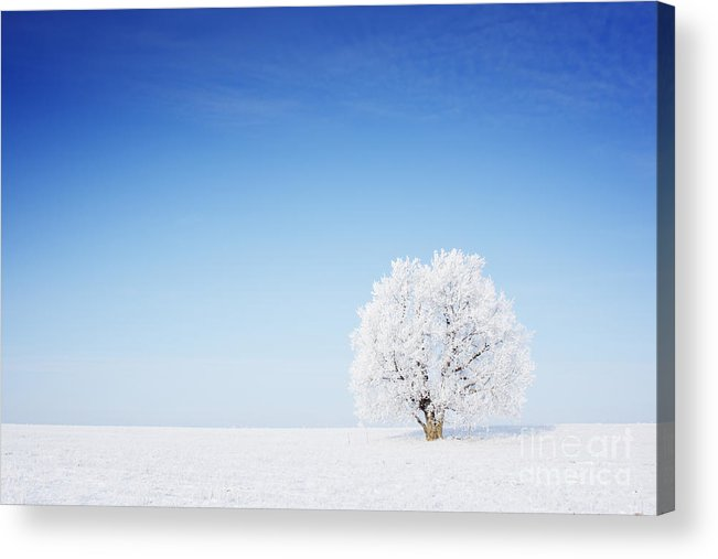 Forest Acrylic Print featuring the photograph Winter Tree In A Field With Blue Sky by Dudarev Mikhail